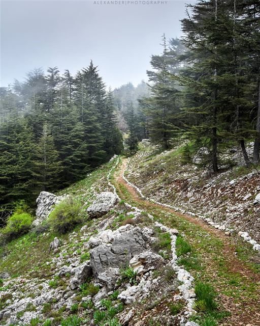 Let's take a walk and breathe some fresh air! Tannourine cedar Reserve ... (Arz Tannoûrîne)