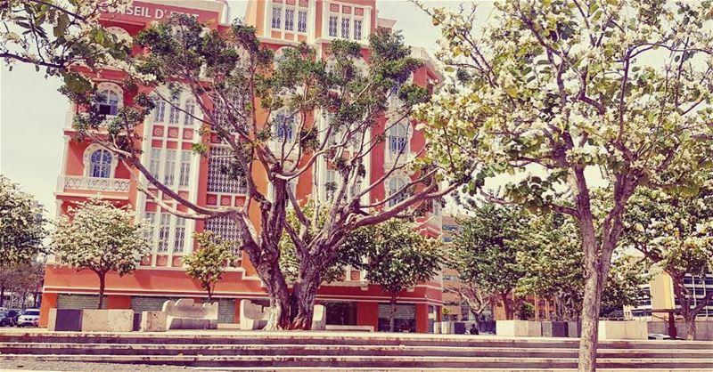 🌸Bloom where you are planted 🌸 natgeoyourshot natgeolebanon beirut... (Beirut, Lebanon)