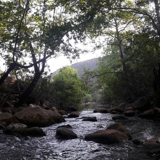river spring trees green view loved it beauty purity south ... (Marjayoûn, Al Janub, Lebanon)