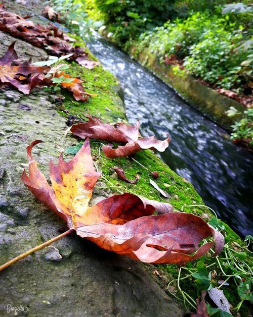 naturephotography naturelove nature instanature myphotography ...