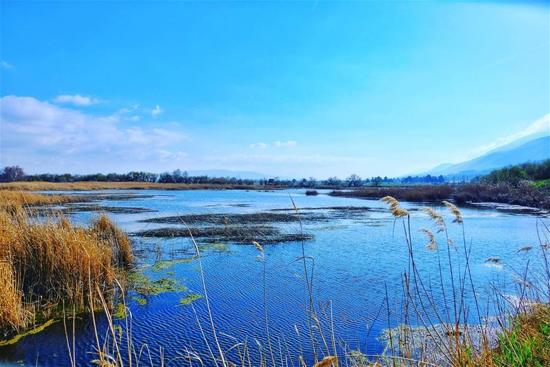 ⚠️Our hikes are back🙌🏼, it's time to meet our wetlands (read the full... (`Ammiq, Béqaa, Lebanon)