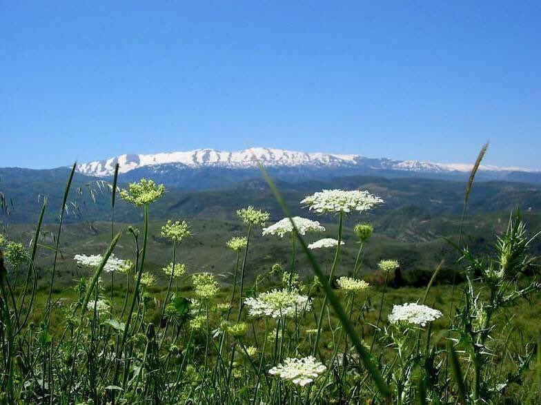 laqlouq lebanon laklouk nature mediterraneo mediterraneanlife ... (El Laqloûq, Mont-Liban, Lebanon)