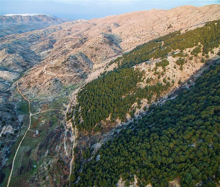 Al Shouf Cedar Nature Reserve, located on the slopes of Barouk mountain... (Arz el Bâroûk)