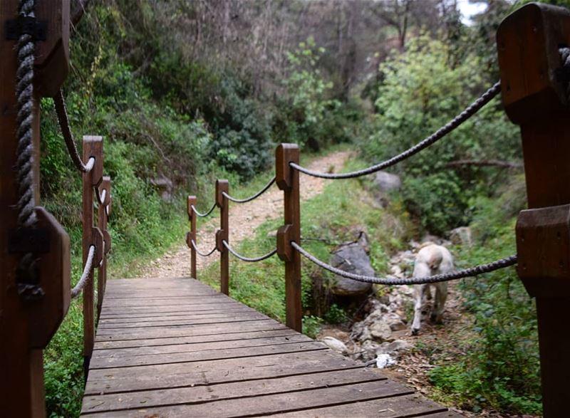 when Sky decided to take a shortcut 💜 bridge sky walk hike dog ...