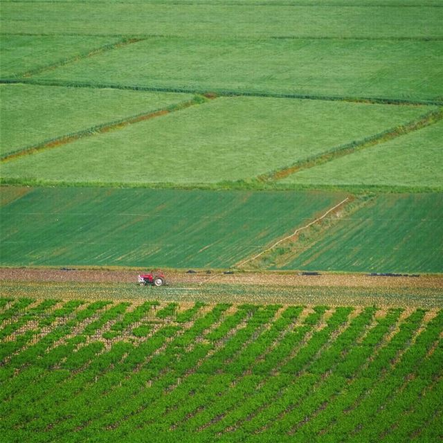 Endless fields of green 🚜 (West Bekaa)