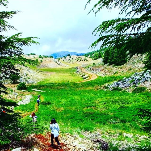 EXPLORE I LEBANON, BAROUK CEDARS & HIKING THIS SUNDAY. BOOKING.03955642.� (Bâroûk, Mont-Liban, Lebanon)