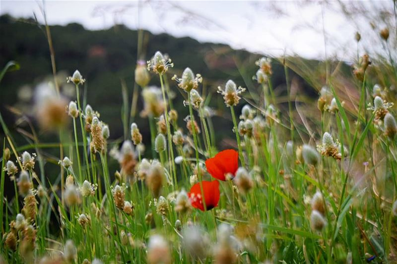 ladiesinred 🌷🌷 goodmorning lebanon springtime colorful flower ...