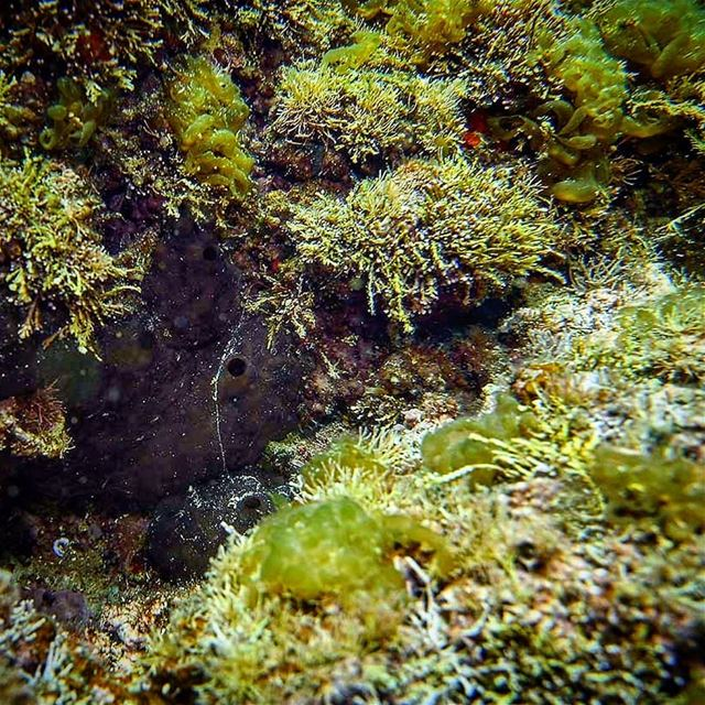Under water flora and a hiding sponge - ichalhoub in Batroun north ...