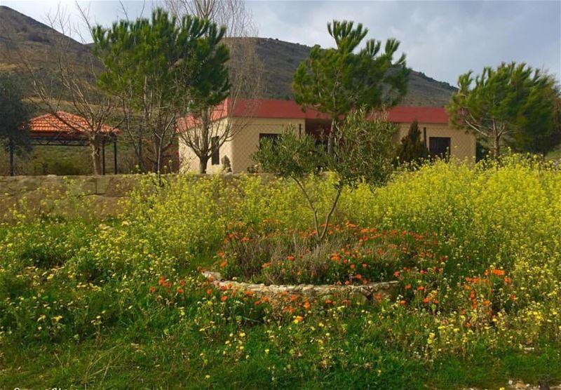 spring lebanon nature holyland instagood instagram instagoodmyphoto... (Mount Lebanon)