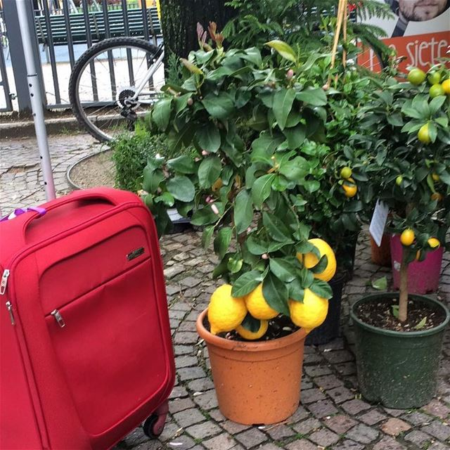 When life gives you lemons 🍋DailySketchLook 286 shopping italian ... (Milan, Italy)