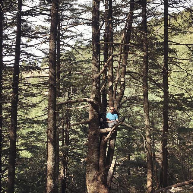If it fits, I sits! 😎.... hiking hikingadventures lebanon ... (Al Shouf Cedar Nature Reserve)