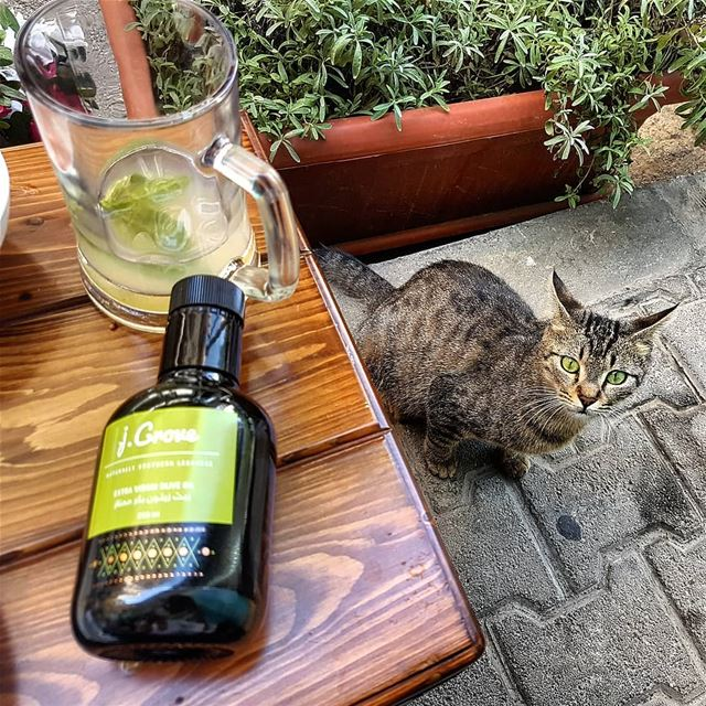 Shades of green 🍃🐺 jGrove Green Cute Cat EVOO ExtraVirginOliveOil ... (Kelly's Fish Lounge)