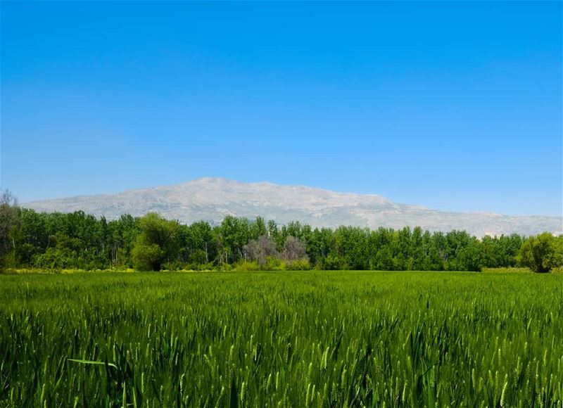 Beautiful colors of the Bekaa valley''''''' whatsuplebanon ... (Beqaa Valley)