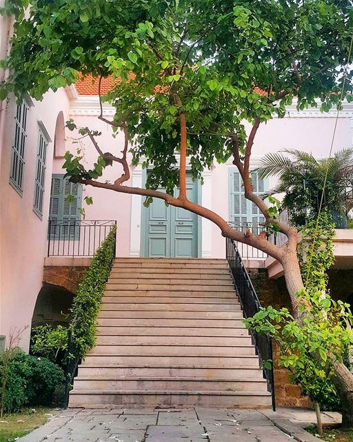 Good morning 💚🏡🍀 (Al Batrun, Liban-Nord, Lebanon)