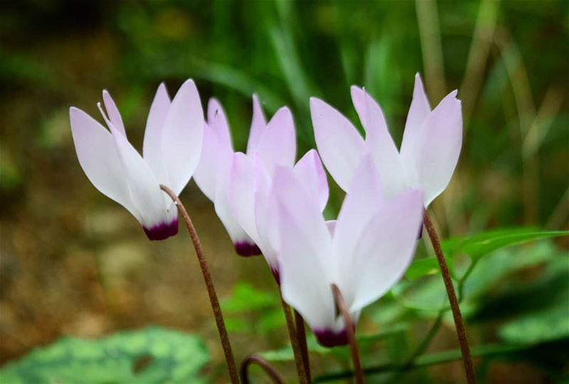 rise and shine 🌸🌸 goodmorning morningvibes flower lila ...