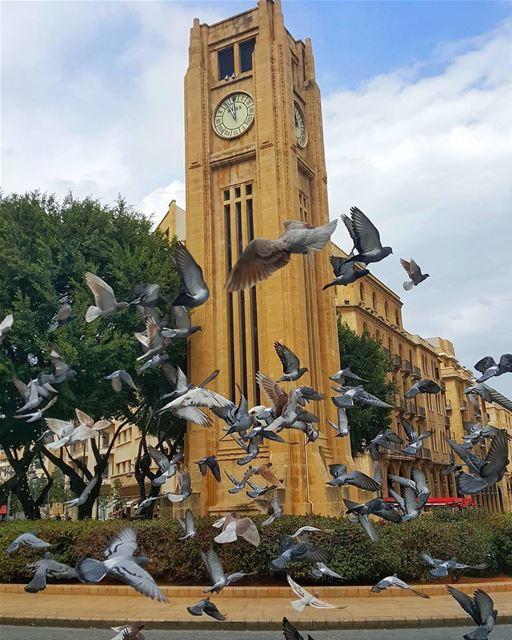 ...وحدهم أوفياء لساحة النجمة ...Happy Monday igers 👋🌞🏛🕊By @antoine.gk (Downtown Beirut)