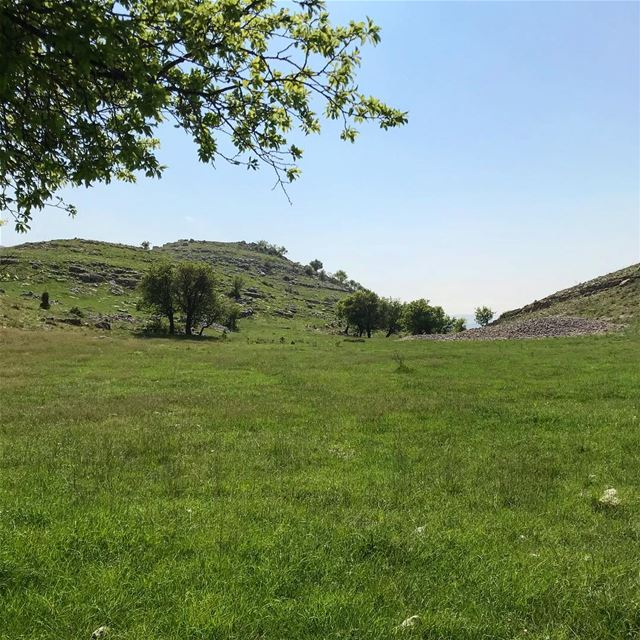 The grass is always greener on the other side of the fence... lebanon ... (Al Shouf Cedar Nature Reserve)
