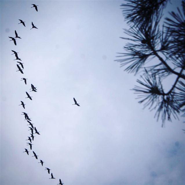 soaring ... (Baïssoûr, Mont-Liban, Lebanon)