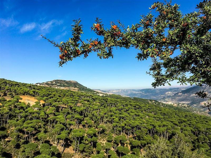 Finding paradise wherever I go 💫.......... lebanon ... (Jezzîne, Al Janub, Lebanon)