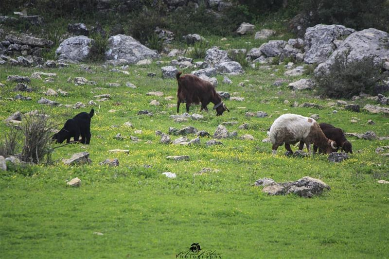Good morning • • • chouf shoufreserve lebanon beirut livelovelebanon... (Baadarâne, Mont-Liban, Lebanon)