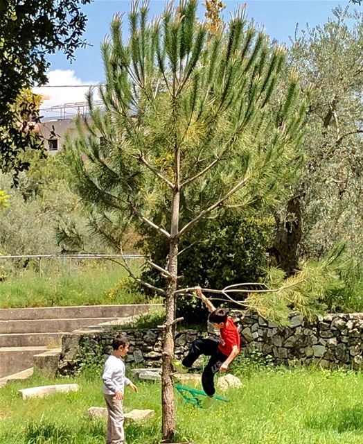 Playing with trees, not PlayStation. kidsplaying trees lebanon ...