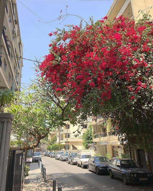 Ashrafieh Area • Beirut Lebanon • 🇱🇧..... beautifullebanon ... (Beirut, Lebanon)