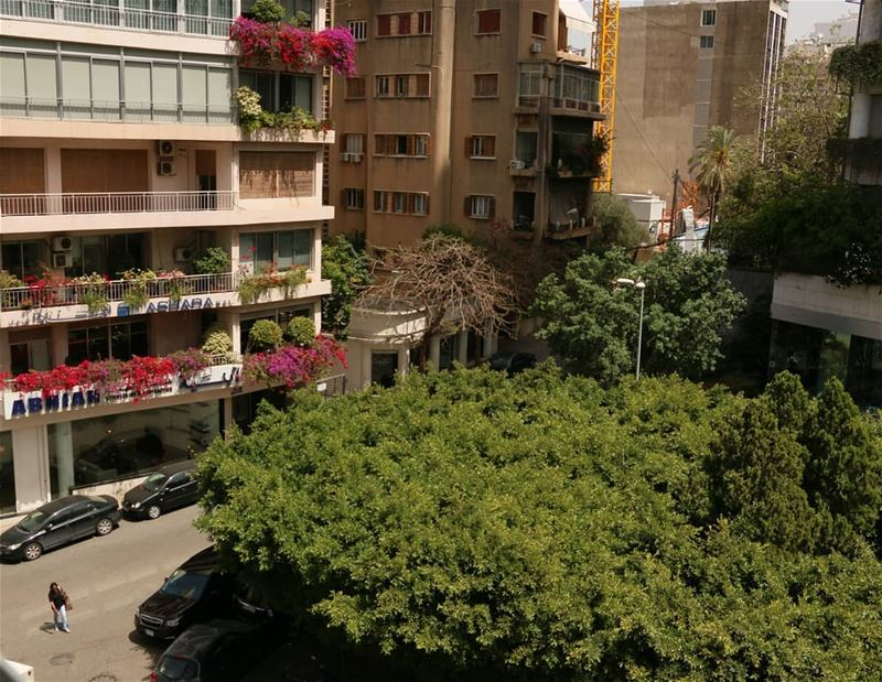 Lebanese capital is full of surprises. One day you open your office window... (Ashrafiyah, Beyrouth, Lebanon)