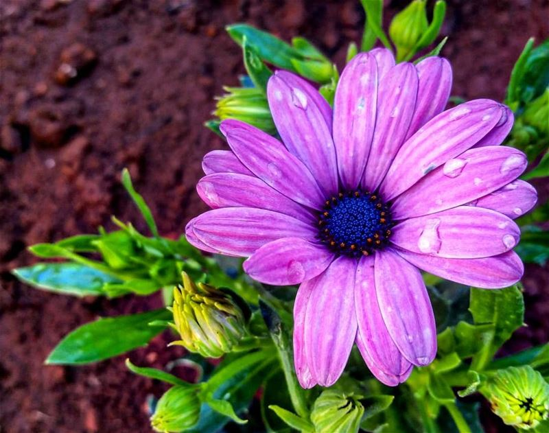 Love is a flower, you've got to let it grow 💙 Good afternoon 🌷 flowers...