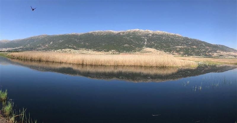 Nature's healing energy ‼️.................. lebanon ... (West Bekaa)