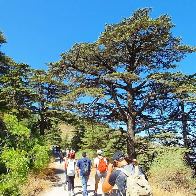 EXPLORE I LEBANON, BAROUK CEDARS & HIKING THIS SUNDAY. BOOKING.03955642.� (Shouf Cedar Ain Zhalta)