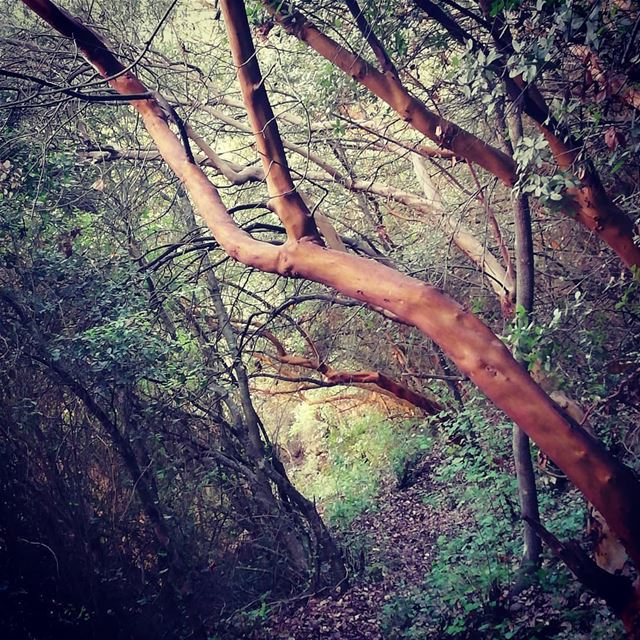 Walking in the midst of dlebta's wonders alice in wonderland style !... (Dlebta, Mont-Liban, Lebanon)