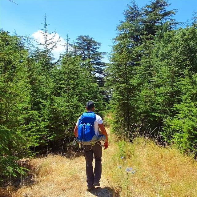 EXPLORE I LEBANON, AIN ZHALTA CEDARS & HIKING THIS SUNDAY.... (Shouf Cedar Ain Zhalta)