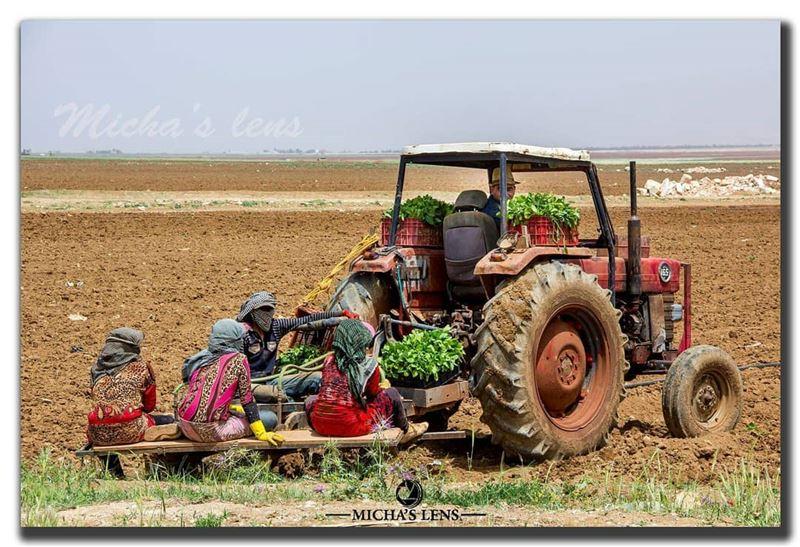 workers ... lebanonbylocal discover961 thebestinlebanon wearelebanon ...