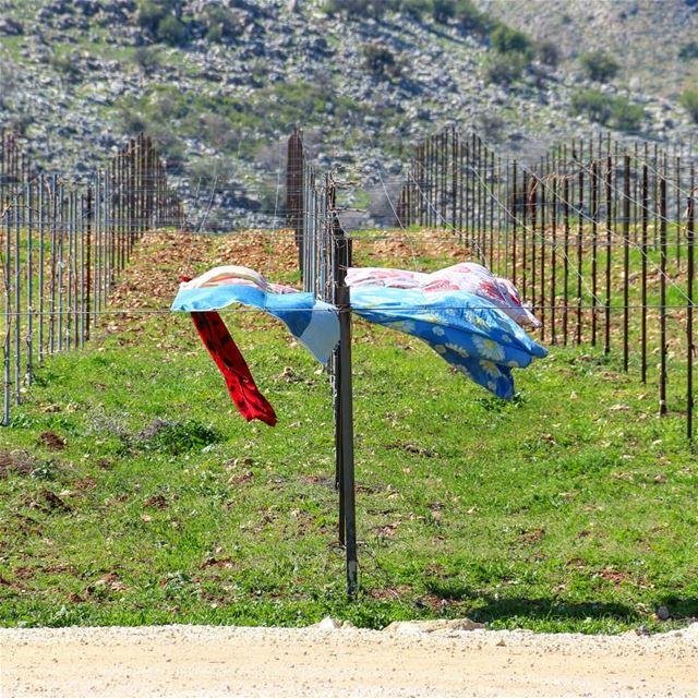 طلع الهوا.. 🌬 ضبوا الغسيلات 🎽.... livelovebeirut wearelebanon ... (Kfarmechkî, Béqaa, Lebanon)