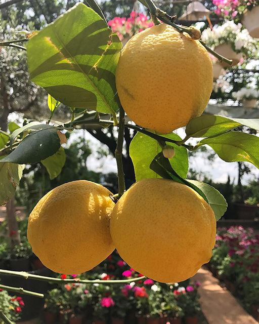 Une limonade ? Hilmi thakak 😉 whatsuplebanon livelovelebanon ...