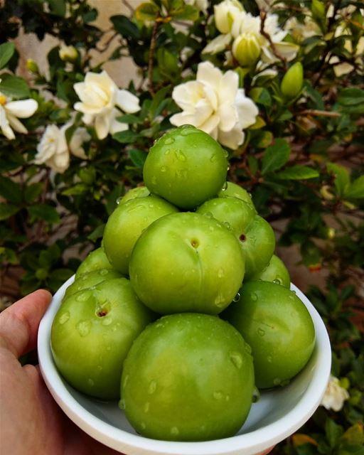 جنارك 💚•••••Follow me for more shots 👉 @tamig.m fruit eat... (Beirut, Lebanon)
