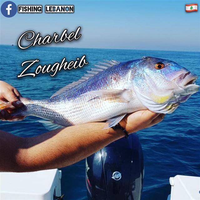 @charbel_zougheib _ @fishinglebanon - @instagramfishing @jiggingworld @what (Lebanon)