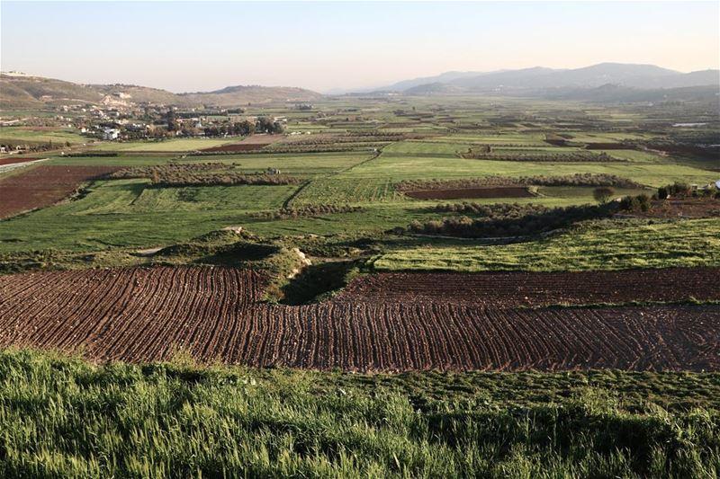 SpringColors 🌱 (Marjayoûn, Al Janub, Lebanon)