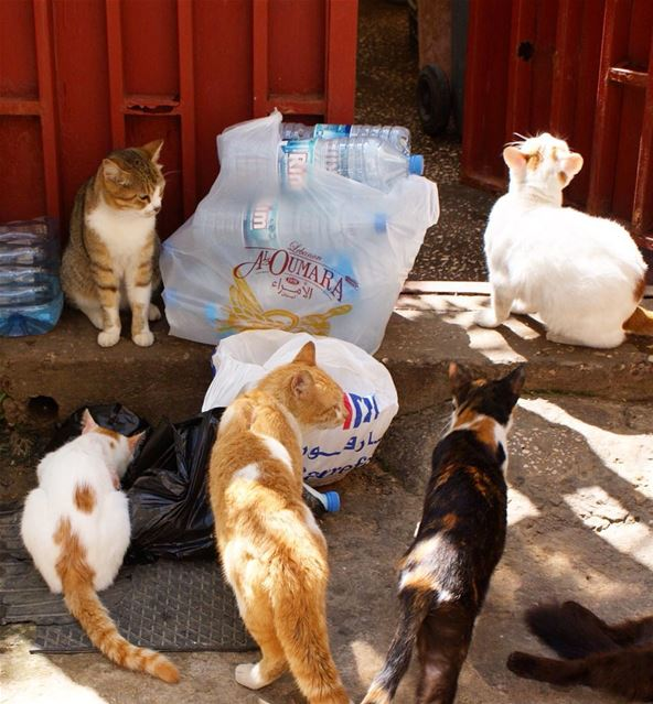 the cat lady's residence 🐈 (Ain El Mreisse, Beyrouth, Lebanon)