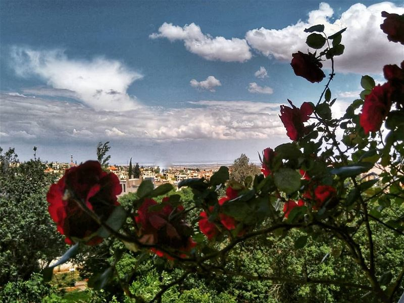 ومزنرة بالورد ...By @firassafwan hermel hermel_city bekaa lebanon ... (El Hermel, Béqaa, Lebanon)