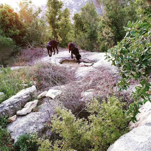 Rediscovering your own villlage with your pets, taking paths we used as... (Dlebta, Mont-Liban, Lebanon)