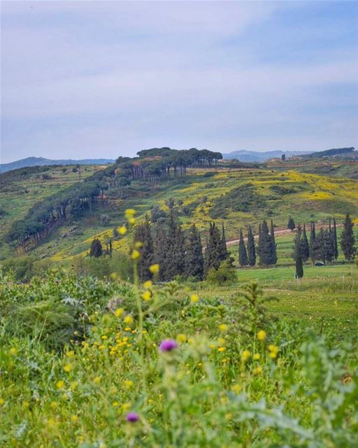 Colors are the smiles of nature - Leigh Hunt ... (Nabatieh Governorate)
