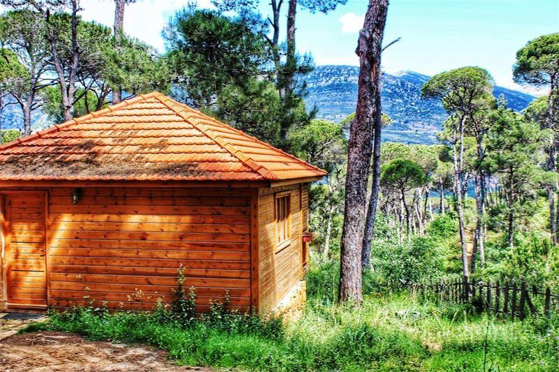 Litteraly lamaisondelaforet 🏕 livelovejezzine southlebanon........ (La Maison de la Forêt)