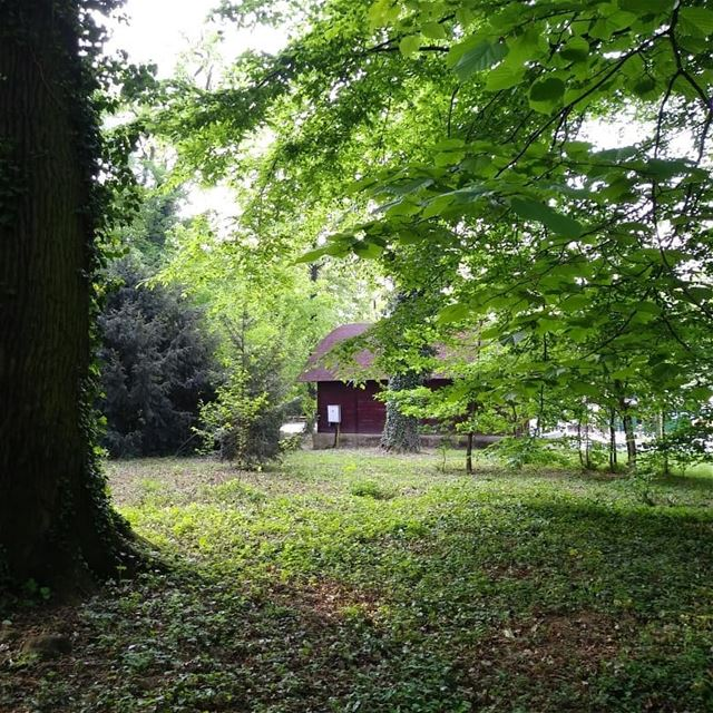 Se[a] the forest through the trees! Start of the ZeroWaste Europe... (Maksimir Park)