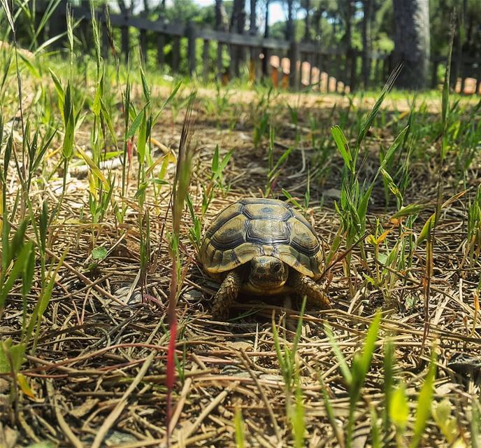 Welcoming a very special guest today to our resort 🐢😍 ⠀⠀⠀⠀⠀⠀⠀⠀⠀⠀⠀⠀⠀⠀⠀⠀⠀⠀⠀