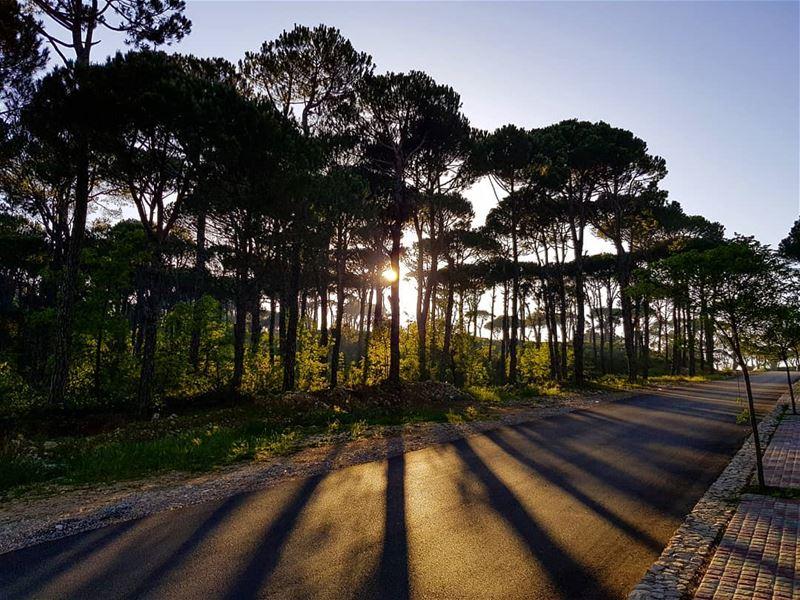 Observe the beauty of BOIS DE BOULOGNE💎 natgeolebanon beirut... (Bois De-Boulogne, Mont-Liban, Lebanon)