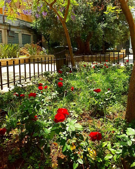 Beirut has more green public spaces than we think goodmorning .........