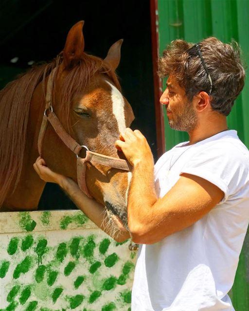 Cuddle buddy🐎•••• horse waho lebanon nature ... (Beit Meri, Mont-Liban, Lebanon)