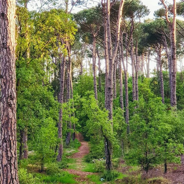 🌳Get lost in nature and you will find yourself 💚🌳 natgeoyourshot... (Bois De-Boulogne, Mont-Liban, Lebanon)