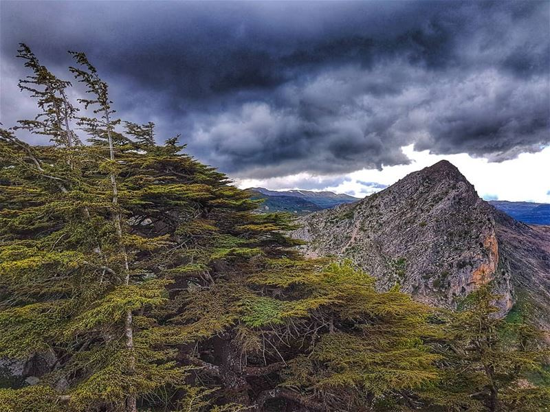 """The clearest way into the Universe is through a forest wilderness"".John... (Cedar Reserve Tannourine)"